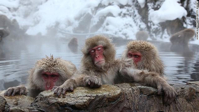 Watch Japan's snow monkeys de-stress
