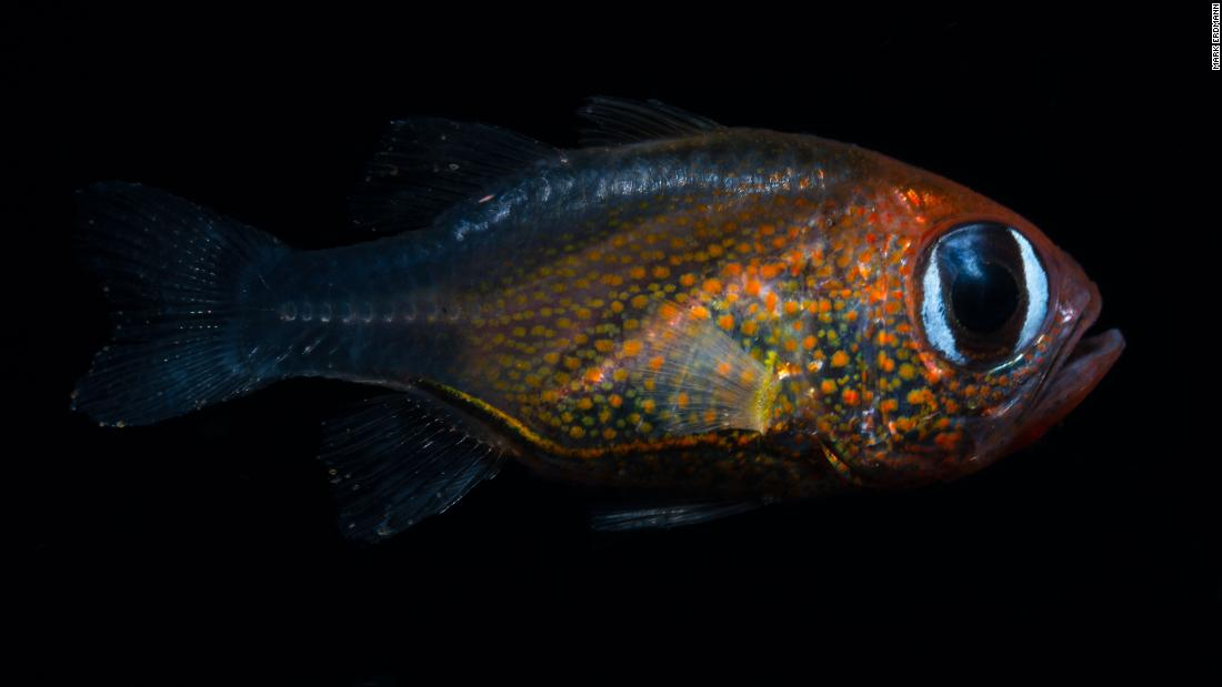 Scientists discovered 71 new species this year. Here are some of their favorites