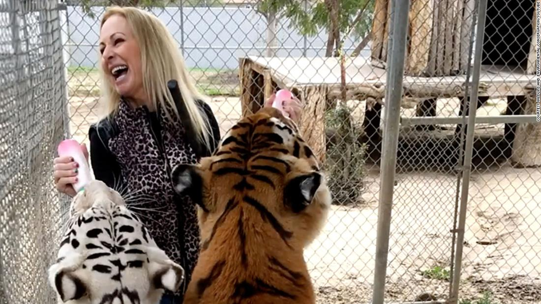 Patty Perry: Wildlife conservationist mauled by her own tigers insists they were just playing with her